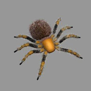tarantula spider 3d max