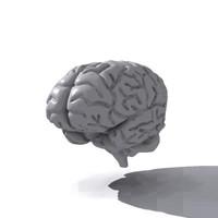brain.zip