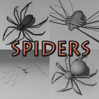 3d spiders arachnid