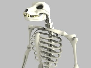 3d skeleton beast