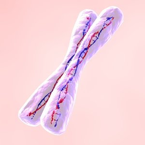 chromosome human x 3d lwo