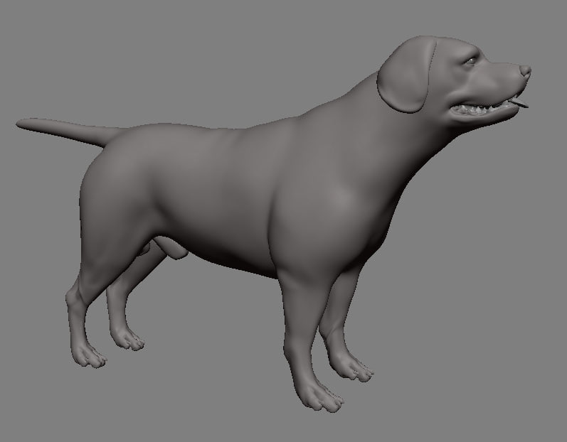 labrador dog animation obj