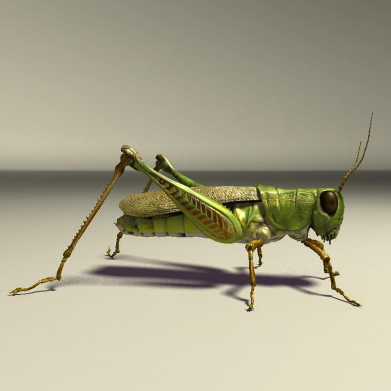 3d grasshopper grass
