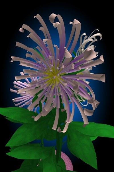 flower chrysanthemum c4d