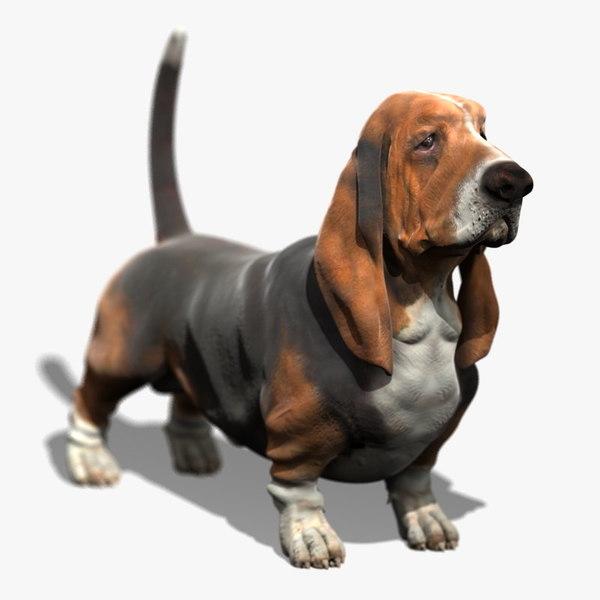 3d model bassethound dog