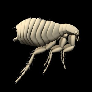 insect flea dxf