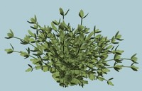 bush shrub 3d model