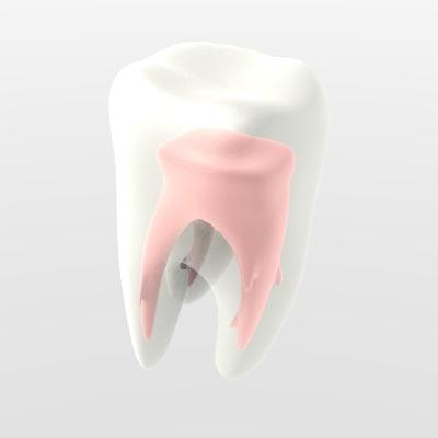maya teeth