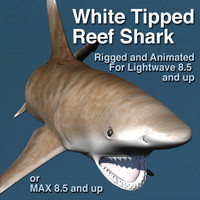 White Tipped Reef Shark, rigged and animated for Lightwave 8.5 and up or 3DS Max 8 and up