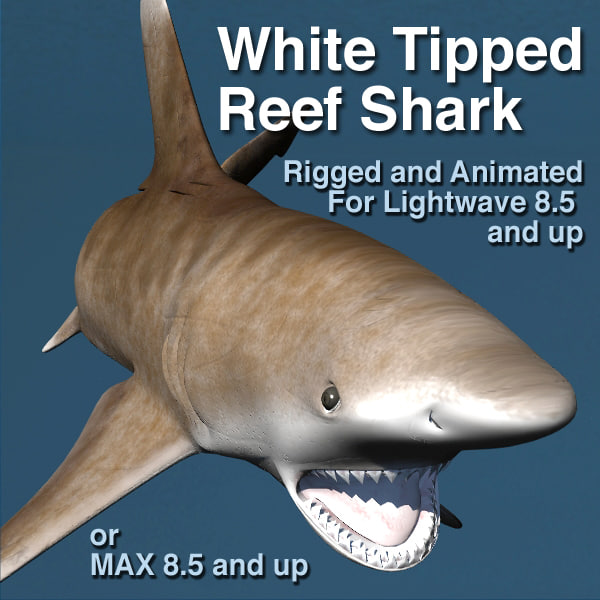 lightwave white tip shark rigged
