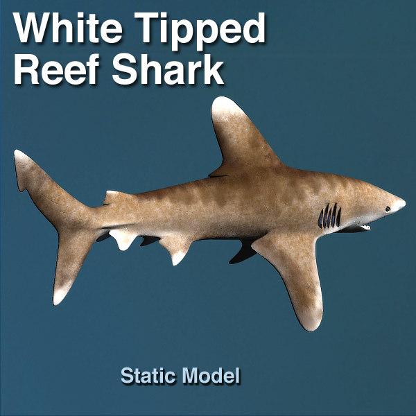 white tip shark max