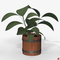 3d model plant house
