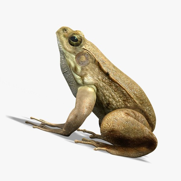 photorealistic green frog 3d model