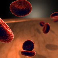 3d model vein blood cells