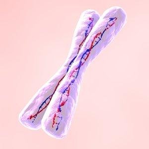 chromosome x max