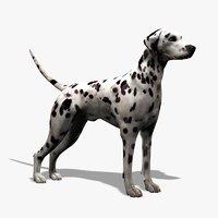 3d dalmatian dog model