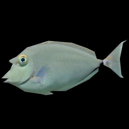 fish x 3d model