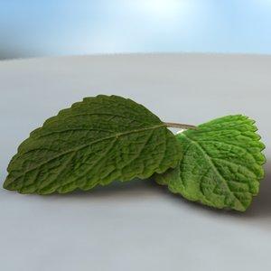3d mint leaf