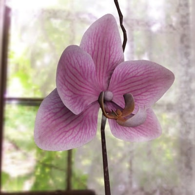 3ds max orchid flower