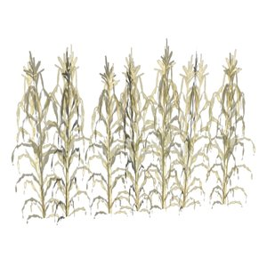 crops growth corn wheat 3d model