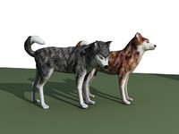 3d model sled sleddog dog