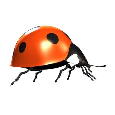 ladybug bug max