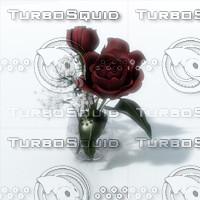 lwo roses vase