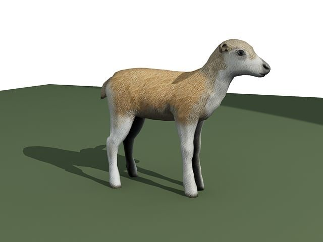 3ds max caribou calf