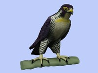 Peregrine Falcon Low Poly  3D Model