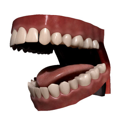 realistic mouth toung teeth human max