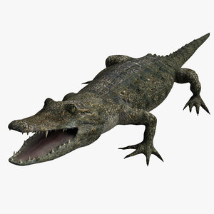 crocodile alligator 3d model