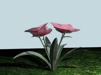 3ds max annual phlox
