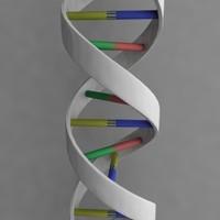 3d model dna cell