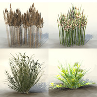 Collection_bog_plants