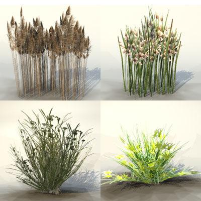bog plants max