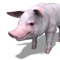 PIG model rigged