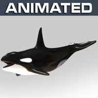 max killer whale