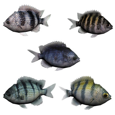 oceanic fishes 3d max