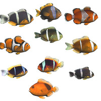 3d model oceanic fishes