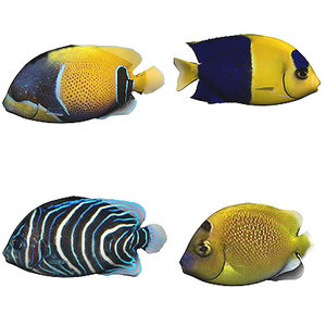 oceanic fishes 3d x