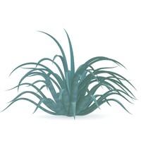 agave vilmoriniana 3d model
