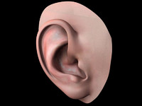 3dsmax human ear