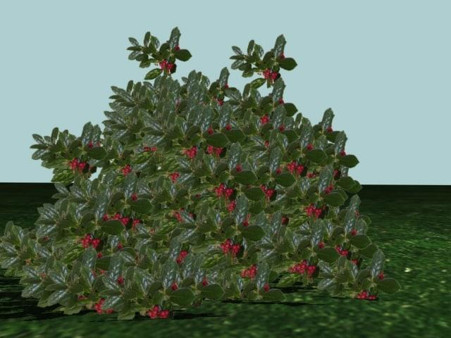 3d model bush