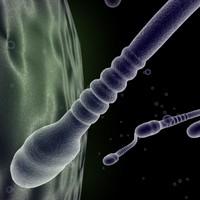 3d spermatazoa sperm