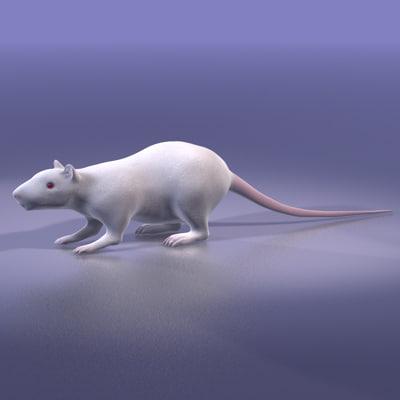rat white 3d model