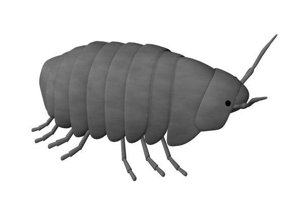 3d model of pill bug