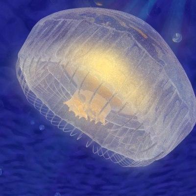 jellyfish fish 3d max