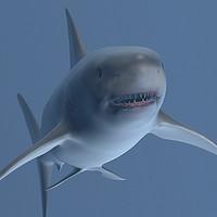 White Shark V2