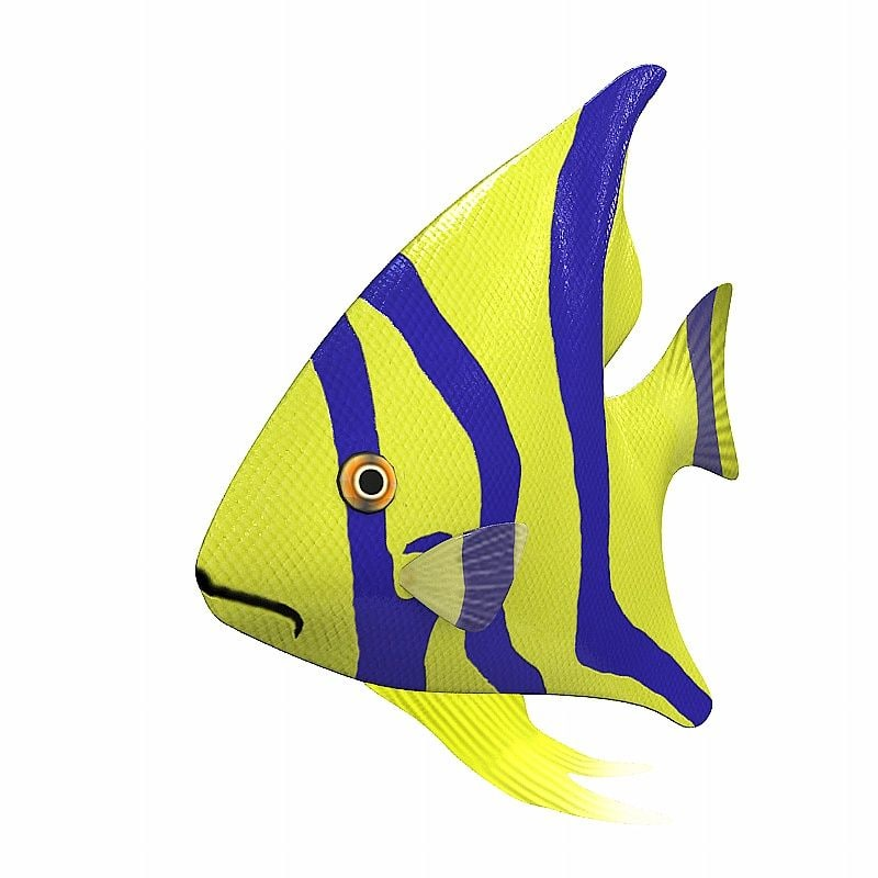 exotic fish animation 3d model