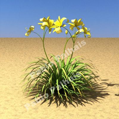 max hemerocallis x hybrida daylily